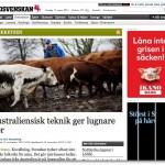 Australiensisk teknik ger lugnare kor - Omkretsen - Sydsvenskan - Nyheter dygnet runt